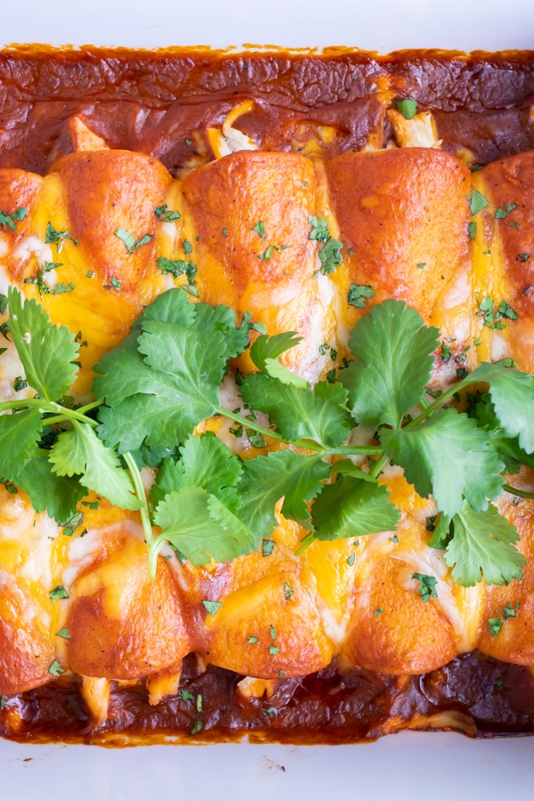 A row of easy chicken enchiladas with shredded cheese and authentic Mexican sauce.