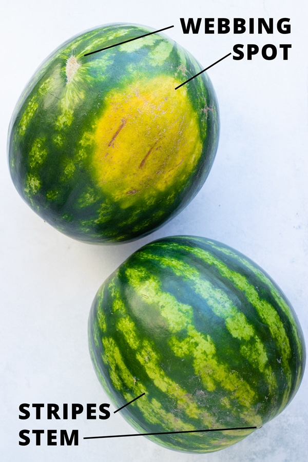 Two watermelons that show their webbing, the yellow ground spot, dark green strips, and the stem.