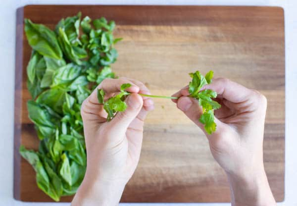 Basil leaves are removed from the stem.